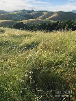 Stu Shepherd - Wine Country Hills