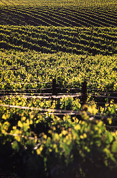 Wine Country by Keith May