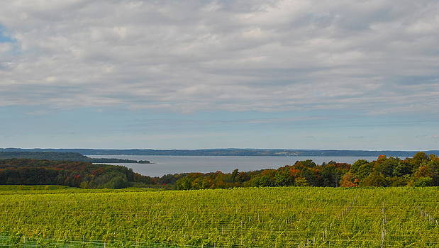 Wine country Michigan by Amanda Letcavage