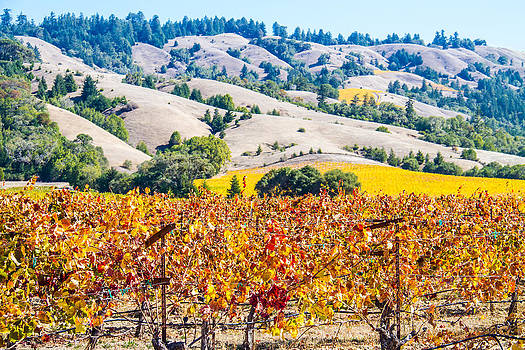 Wine country Napa C.A. by Brian Williamson