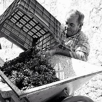#wine #grapes #portugal by Essy Dias