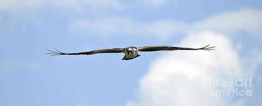Wing Man - Osprey by Skye Ryan-Evans