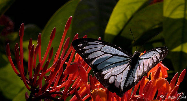 Winged Beauty by Evewin Lakra