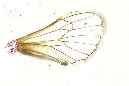 Winged Critters 2 by Mina Teslaru