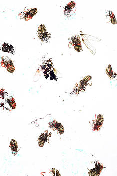 Winged Critters 3 by Mina Teslaru