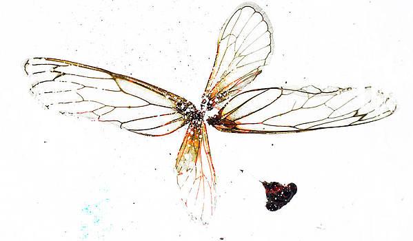 Winged Critters by Mina Teslaru