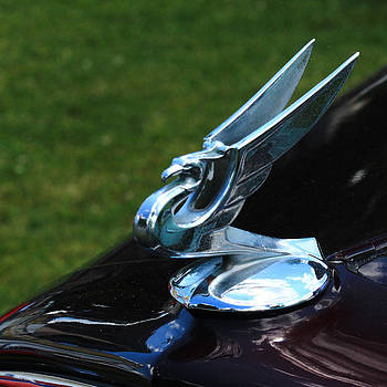 Winged Phoenix by Jim Cotton