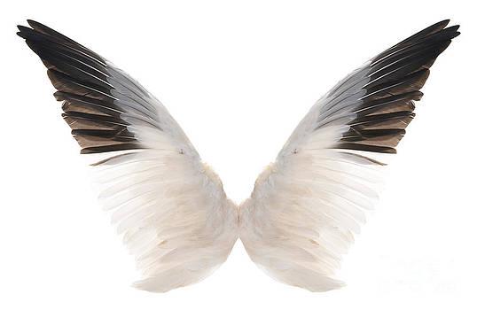 Wings by Kari Marttila