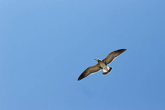 Gaurav Singh - Wingspan