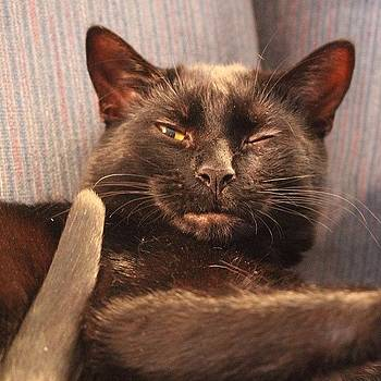*wink! #bagheera #blackcat by Meg Pace