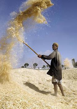 Winnowing Wheat in Iran by David Murphy