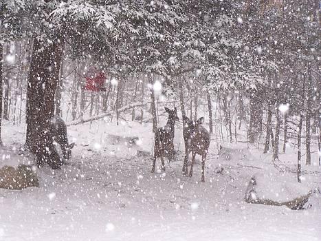 Winter 2014 by Lila Mattison