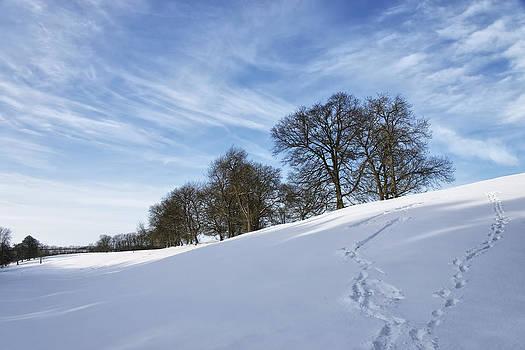 Winter by Alastair Graham