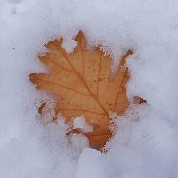 Winter All Around by Alison Richardson-Douglas