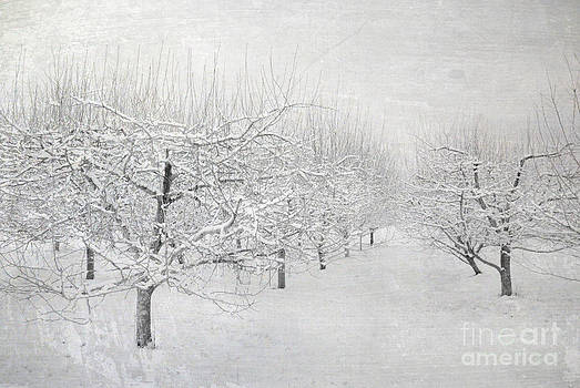 Winter Apple Orchard by Sharon Coty