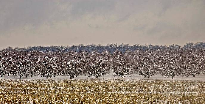 Winter Apple Trees by Tracy Rice Frame Of Mind
