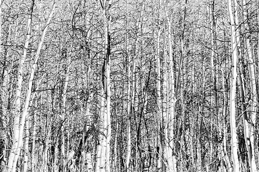 Winter Bark by Rick Otto