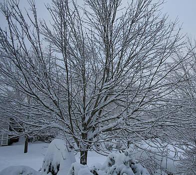 Winter Beauty by Sharon Orella