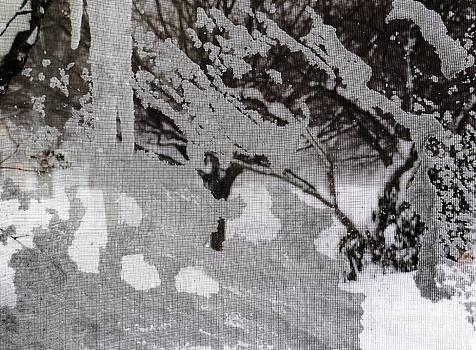 Winter Below Zero 3 by Judy Via-Wolff