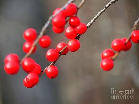 Christine Stack - Winter Berries