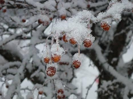 Winter Berries by Pamela Turner
