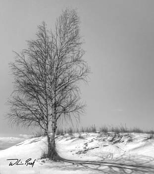 William Reek - Winter Birch in Black and White