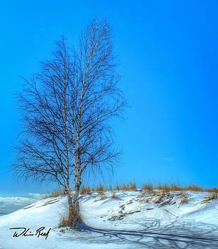 William Reek - Winter Birch in Color