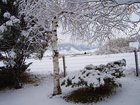 Winter Birch by Yvette Pichette