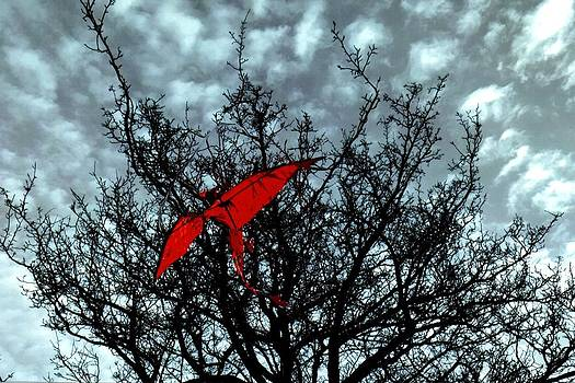 Winter bird by Rudolf Sechovec