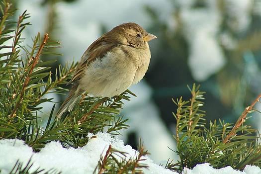 Winter Bird by Tami Rounsaville