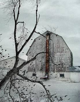 Gothicrow Images - Winter Birds