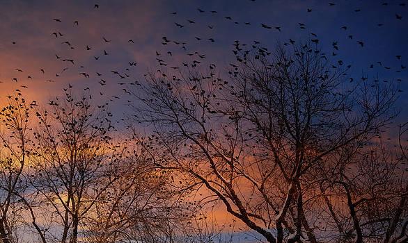 Utah Images - Winter Birds