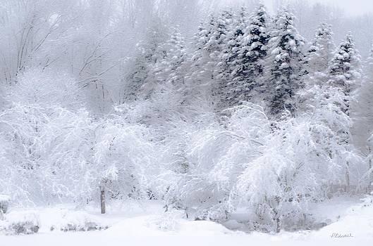 Winter Bliss by Pat Edsall
