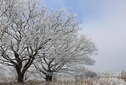 Winter Blossom by J J  Everson