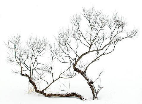 Winter Bonsai by Rob Huntley