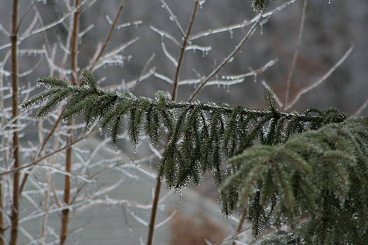 Winter Branches by Anita Parker