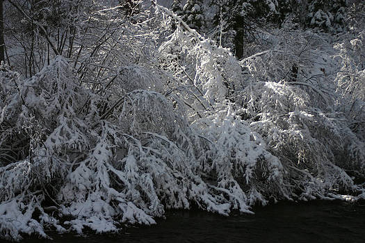 Winter Branches at Tahoe by Barbara Chachibaya