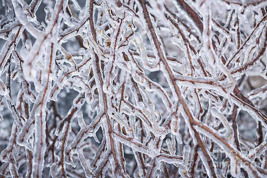 Elena Elisseeva - Winter branches in ice