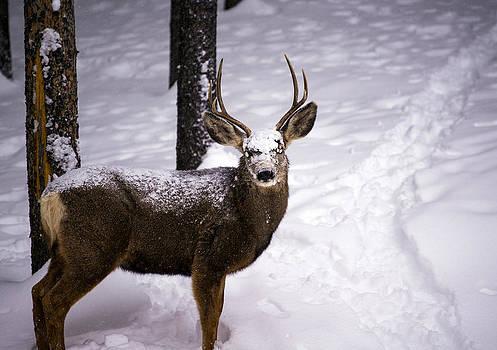 Matt Swinden - Winter Buck