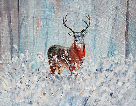Winter Buck by Meaghan Troup