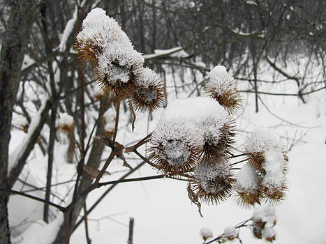 Winter Burdock by Sandra Martin