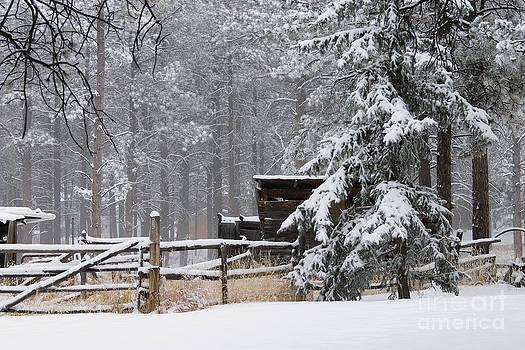 Steve Krull - Winter Cabin