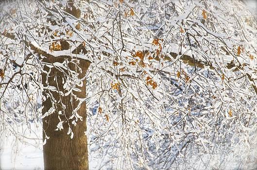 Christine Belt - Winter Calm