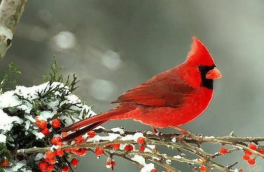 Shere Crossman - Winter Cardinal