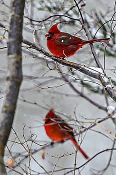 Winter Cardinals by Susan Leggett