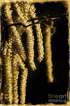 Winter Catkins by Michelle Orai
