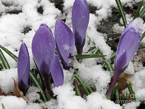 Winter Closing by Louise Peardon