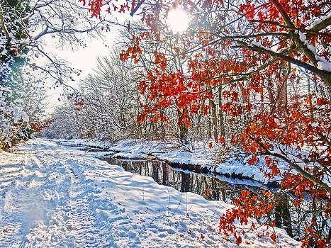 Winter colors by Mikki Cucuzzo