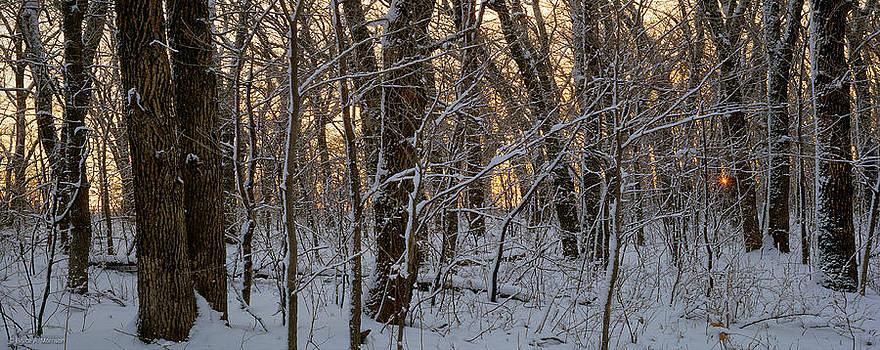 Winter Dawn by Bruce Morrison