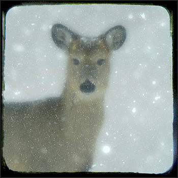 Gothicrow Images - Winter Deer